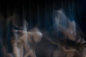 SelkNord_LES4506©Koen_Cobbaert
